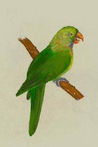 Parrots4.jpeg