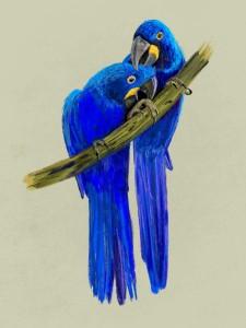 Parrots5-16x12.jpeg